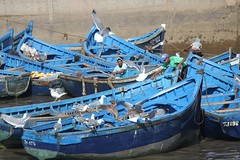 Blue Boats (David K. Edwards) Tags: boat fishing bird fisherman dock mogador morocco blue gull seabird essaouira