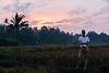 Ubud, Bali, May 2018 (Rait_Tuulas) Tags: ubud bali indonesia sunset rice field evening