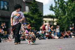 PugCrwal-137 (sweetrevenge12) Tags: portland oregon unitedstates us pug parade crawl brewing sony pugs dog pet