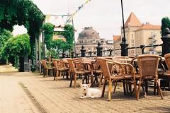 000047 (23/25) Tags: filmphotography film analogue minoltax700 kodakcolor200 필름사진 필름 плёнка 35ммплёнка 35mmfilm dog berlin berlinonfilm