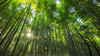 Bamboo Curtain (KRW_GNS) Tags: abstract arashiyama asia asian attraction background bamboo beautiful culture ecology environment famous fence foliage forest garden green grove growth japan japanese jungle kyoto landmark leaf natural nature outdoor park path plant road sagano scene serene tourist travel tree wood zen