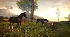 Devin's Eye (Kayleigh Lavender*) Tags: devin horse cheval landscape devin´seye roymildor