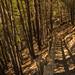 #PelsCamins de Montenartró | Llavorsí | Parc Natural de l'Alt Pirineu