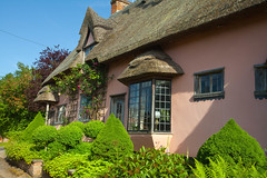 The Pink Cottage @ Kersey (Adam Swaine) Tags: counties cottage cottagegarden villagecottage englishcottage kersey suffolk suffolkvillages englishvillages english england british eastanglia pinkgreen thatchedcottage rural ruralvillages beautiful canon buildings 2018 bb tourism englishtouristboard