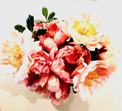 Peonies    Day 4       6/18 (Ma Wolff) Tags: vibrant color light shadows values beauty highwhite highlight bright white coral pink peonies peony cut flowers bouquet