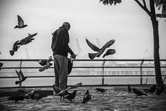 Entre Palomas (guspaulino1) Tags: buenosaires laboca argentina nikond80 sigma18200 ciudad ciudadautonomadebuenosaires street calle blancoynegro monocromo aves palomas niebla puerto