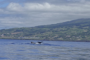 Wildlife seen whilst whale watching in Faiail Azores