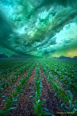 From Beginning To End (Phil~Koch) Tags: inspired inspirational season beautiful hope love joy dramatic unity trending popular canon rural fineart arts shadow sun sunrise light peace wisconsin shadows endless pastel spring green earth crop corn rows storm clouds rainagricutlure farming