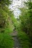 green path (kasa51) Tags: path passage woods forest hakone kanagawa japan tree grass weed