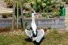 Reiger met zonnecollectoren (Roel Wijnants) Tags: ccbync roelwijnants roelwijnantsfotografie roel1943 reiger opvan warmte slootkant vogel heron