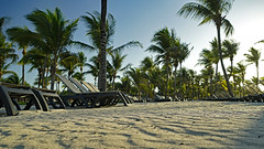 After a few too many tequilas, this was my view in the morning. (Stickwork-Steve) Tags: mexico rivieramaya mayanriviera barcelorivieramaya barcelo sand beach trees palmtrees sky sony sonya7ii sonyfe24240mm