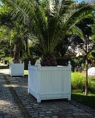 Large potted palm trees (eutouring) Tags: paris france travel jardin garden jardinyitzhakrabin yitzhakrabin railway railwaylines pots palmtree potted plant plants