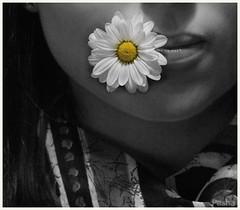 flower (pavelfadeevv) Tags: flower photoartproject follow me httpswwwyoutubecomcphotoartproject photo photography mood bw still art color monochrome blackandwhite stilllife beautiful beauty wooden vintage background light drink food fruit berries glass cup flowers nature coffee morning animals landscape