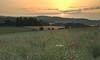 earlyMorning (tobias-eger) Tags: morning sun sunrise nature landscape blackforest meadow field fields flower flowers trees horizon early schwarzwald landschaft natur sonne sonnenaufgang felder wiese blumen bäume