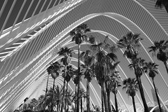 (Cheese_And_Wine) Tags: cheeseandwine blackandwhite 2470mm valencia santiagocalatrava cityofartsandsciences ciutatdelesartsilesciències lumbracle