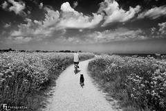 Auf dem Weg, mit Hund