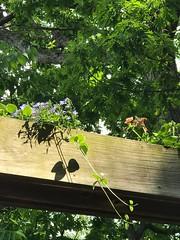 IMG_4029 (Marshen) Tags: flower box