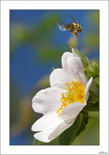 Con el polen a otro lado