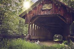 Darla, her boy, and The Blacksmith Shop Covered Bridge 23/52 (Boered) Tags: newhampshire cornish coveredbridge blacksmithshop dogs darla pokey 52weeksfordogs