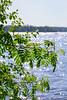 Pihlajanoksat (Markus Heinonen Photography) Tags: pihlaja sorbus aucuparia rowan rönn pyhäjärvi hatanpää tampere suomi finland kesä summer luonto nature