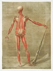This fascinating collection of anatomical illustrations is created by Arnauld-Eloi Gautier-Dagoty (1741-1771) for the Royal College of Medicine of Nancy in Lorraine, France. Dagoty elegantly depicted muscles of the human body as perceived by scientists in (Free Public Domain Illustrations by rawpixel) Tags: otherkeywords anatomy arnaudeloi arnaudeloigautierdagoty arnauldeloigautierdagoty body bodypart bones cc0 courscompletdanatomiepeintetgraveencouleursnaturelles creativecommon0 creativecommons0 fullbody gautierdagoty handdrawing humanbody inside knowledge medical muscle posteriorview publicdomain red structure study tissue vintage