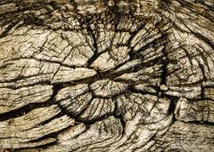 Gorges du temps (patoche21) Tags: arbre bourgogne bourgognefranchecomte cotedor chevignystsauveur europe flore france nature naturemorte photographie plante bois graphisme texture patrickbouchenard burgundy graphic wood groove canyon gorge érosion erosion weathering