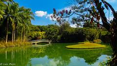 Inhotim, Brasil (Luiz Menin) Tags: trip mg minas gerais brasil brazil paisagem landscape verão verde natureza nature brumadinho inhotim