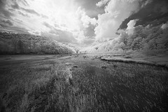 Afternoon on the River (DRCPhoto) Tags: irconverteddslr canon5d digitalinfrared westvirginia cheatriver
