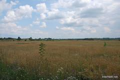 Пшениця, жито, овес InterNetri  Ukraine 051