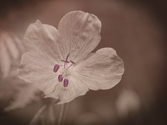 💋💋💋 (zdm69) Tags: zdm69 olympus omd em1 nahaufnahme macro makro closeup flower kiss kisses lips 7dwf