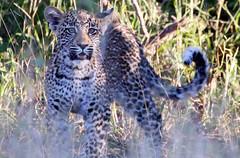 MalaMala Game Reserve, South Africa