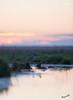 In the quiet morning (MatsOnni) Tags: kuovi numeniusarquata eurasiancurlew mattisaranpää sunrise early morning
