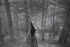 (Silvia Kuro) Tags: branches trees alberi foresta bosco wood woods forest wild wilderness