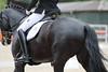 _MG_7909 (dreiwn) Tags: dressage dressur dressuur pferd reitturnier turnierreiten pferdesport horse horseback horseriding equestrian reitverein dressurprüfung kandare doublebridle reiten pferde reitplatz ridingarena