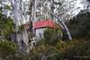 20180527-29-Old Belcher Hut (Roger T Wong) Tags: 2018 australia mtfield mtfieldeast np nationalpark rogertwong sel2470z sony2470 sonya7iii sonyalpha7iii sonyfe2470mmf4zaosscarlzeissvariotessart sonyilce7m3 tasmania bushwalk hut outdoors tramp trek walk