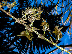 Not Dead Yet Fred (Steve Taylor (Photography)) Tags: fern black blue brown green closeup lake water newzealand nz southisland canterbury christchurch plant branch leaves silhouette reflection winter
