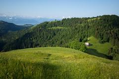 the farmer @Hüttchopf (ZH) (Toni_V) Tags: m2408003 rangefinder digitalrangefinder messsucher leicam leica mp typ240 type240 28mm elmaritm12828asph hiking wanderung randonnée escursione hüttchopf überzütt scheidegg kantonzürich landscape landschaft farmer bauer green brandegg switzerland schweiz suisse svizzera svizra europe ©toniv 2018 180602