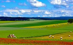 Parterre de coquelicots (Diegojack) Tags: romanelsurmorges vaud suisse d7200 paysages campagnes foin rouleau bigoudis fleurs coquelicots ciel nuages ouverture groupenuagesetciel fabuleuse