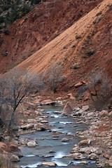 The Virgin & the Vagabond (Ramen Saha) Tags: virginriver river zionnationalpark water mountain ramensaha utah nationalpark