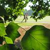 running through the veins (Jim_ATL) Tags: two jogger running track dof green leaf vein piedmont park atlanta