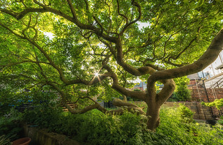Twisted Magnolia