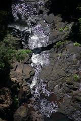 Australia_2018-153.jpg (emmachachere) Tags: subtropical trees hike waterfall boatride springbrook australia rainforest kanagroo animals koala brisbane boat lonepinekoalasanctuary