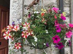 Hanging basket full of wonderful colours. (Bennydorm) Tags: inglaterra inghilterra angleterre europe uk gb britain england cumbria furness ulverston floral colourful iphone6s giugno juni juin june beauty lovely pretty hangingbasket flowers