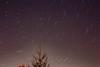 IMG_0577-3 (morejoefotog) Tags: startrails tree night northstar