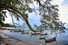 Rawai beach Phuket (Ranjith Kizhakoodan) Tags: rawai phuket rawaibeach beachfront rawaipeir thailand mueangphuket thai ranjithkizhakoodan ranjithtravel ranjithkizhakoodanrajan boat sky tree water landscape