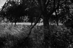 green grass (hugobny) Tags: red filter film blackwhite 35mm foma retropan 320 iso pentax p30 pentaxp30 pentaxlens smc 50mm f17 green grass tom waits nature argentique analogue analog analogique caffenol cl semistand