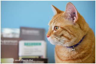 Seeing The Vet And His Cat - Peach XT5812e