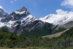 DSC03478 (wongjen) Tags: south america patagonia mountains hills green landscape argentina chile