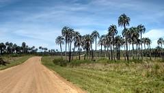 P.N. EL Palmar (Raúl Alejandro Rodríguez) Tags: palmeras palmtrees camino road unpaved campo countryside parque nacional el palmar national park provincia de entre ríos province argentina