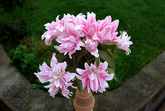 Lilies (Caulker) Tags: lilies vase flowers